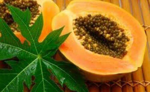 13 användningar och fördelar med papayablad