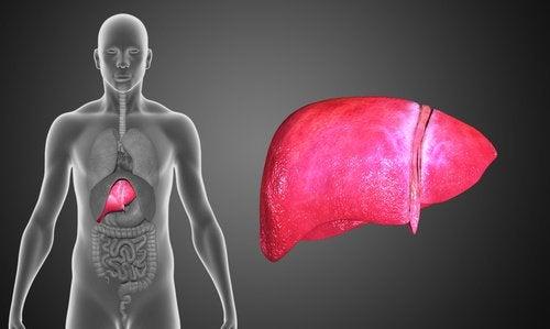 Gurkmeja förbättrar leverhälsan