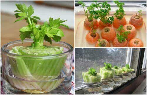 5 enkla grönsaker att återodla hemma