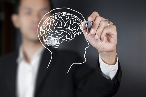 En del av hjärnan mognar inte förrän 36 års ålder