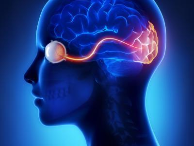 Hjärnan och synen