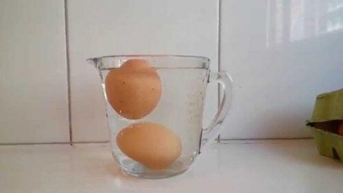 ägg i genomskinlig behållare
