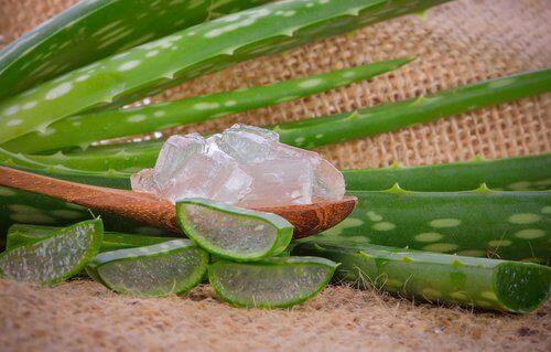 Aloe vera motverkar klåda