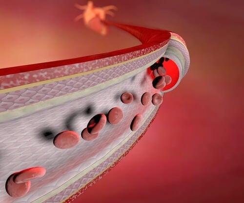 Blodceller-i-venerna