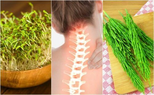 7 medicinska växter som ger dig bättre benhälsa