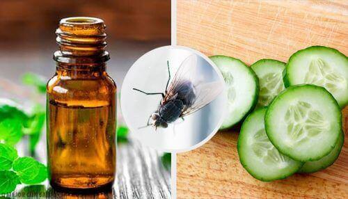 Håll flugorna borta med 7 naturliga medel