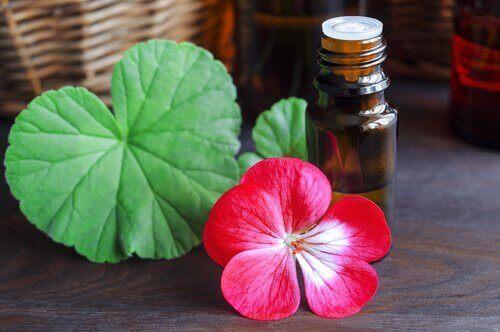 Pelargonolja stimulerar lymfsystemet