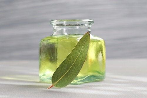 Eukalyptusolja och löv