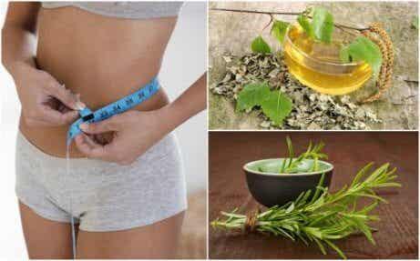 8 hälsosamma örter som hjälper dig att tappa vikt