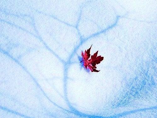 Blomma på is