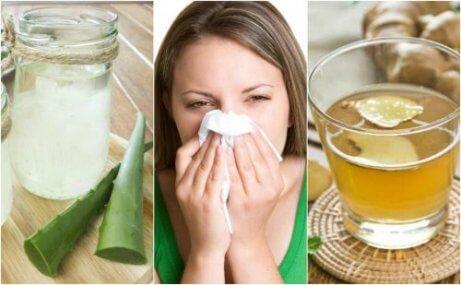 5 naturliga kurer mot allergisk rinit