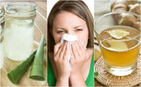 5 olika naturliga kurer mot allergisk rinit