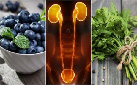 7 livsmedel som kan skydda njurarna och blåsan