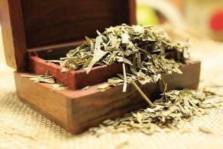 Te på ginkgo biloba kan motverka muskelkramp.