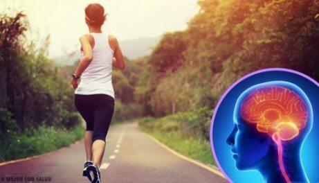 Hur din hjärna påverkas av att du slutar träna