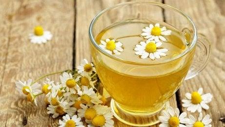Kamomill innehåller antioxidanter