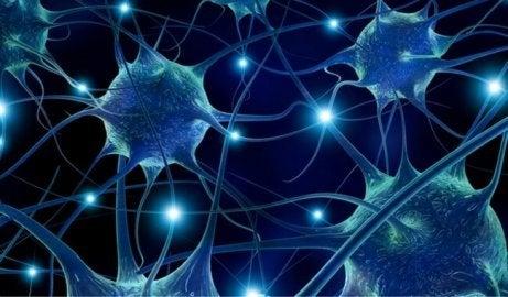 Förebygga neurodegenerativa sjukdomar