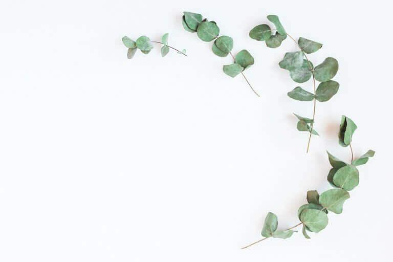 Grenar med eukalyptus