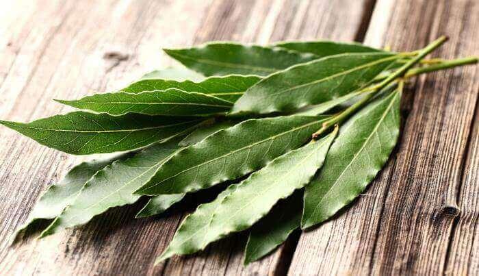 Eukalyptus mot insekter