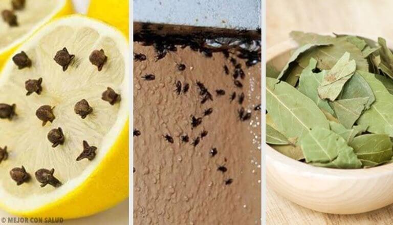 Bli av med irriterande insekter naturligt