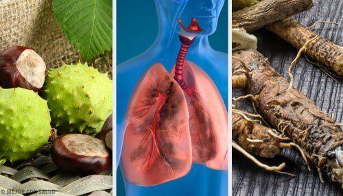 4 huskurer för att andas bättre och stärka dina lungor