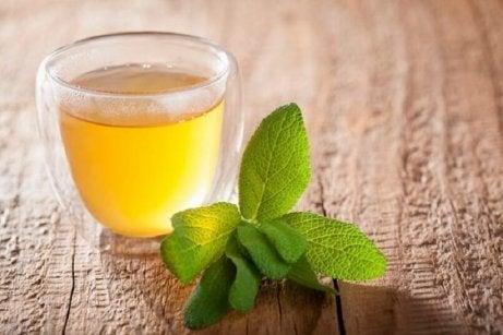 Salvia är antiinflammatorisk