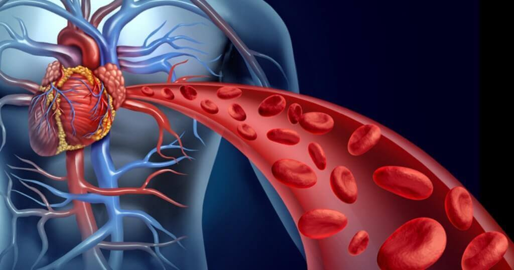 Blodcirkulation i hjärtat