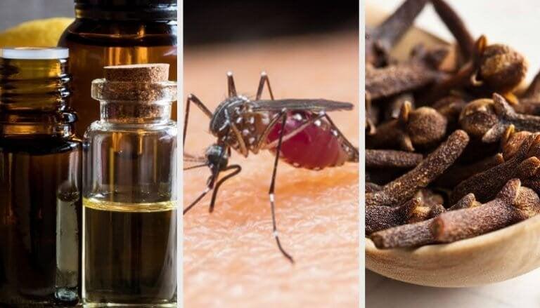 10 lukter som kan hålla myggor borta