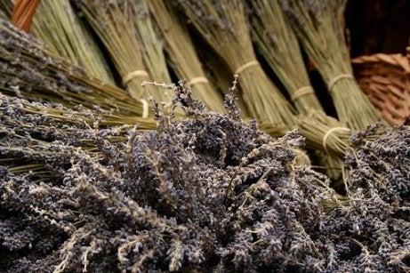 Kvistar med lavendel
