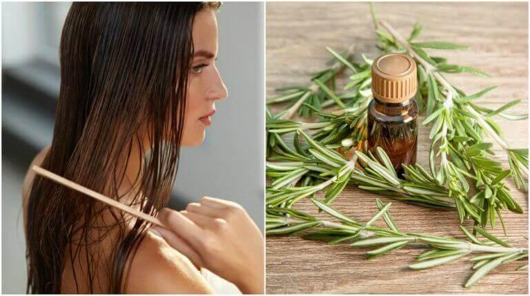 5 intressanta fördelar med rosmarin för ditt hår