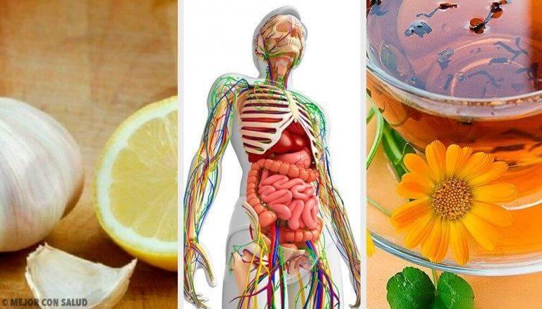 Detoxa lymfsystemet med naturliga kurer och massage
