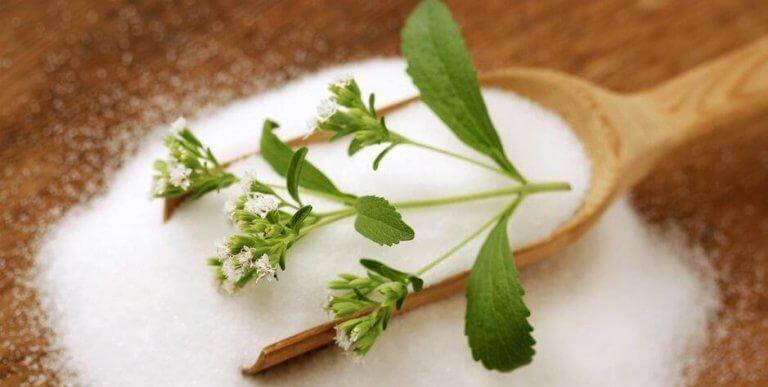 Stevia kan användas som sockerersättning