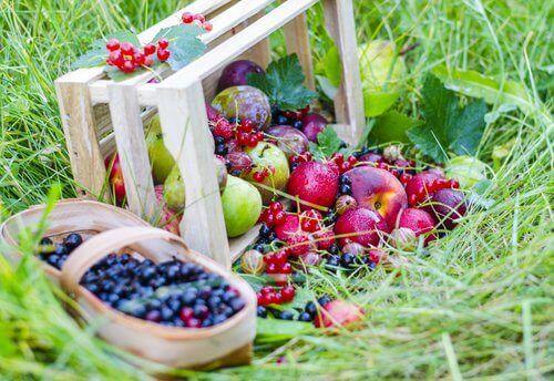 Bar och frukter i gräset