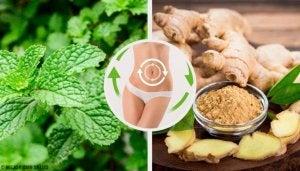 En tredagars detoxdiet med mynta, ingefära och citron rensar hela kroppen