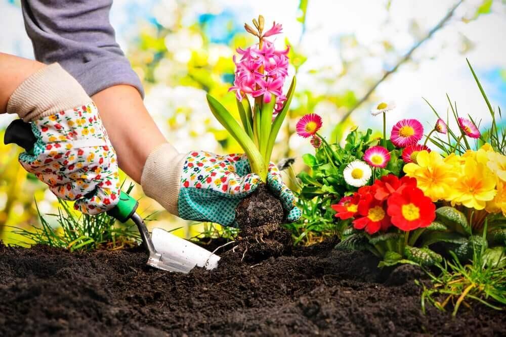 Växter som du enkelt kan odla i din trädgård.