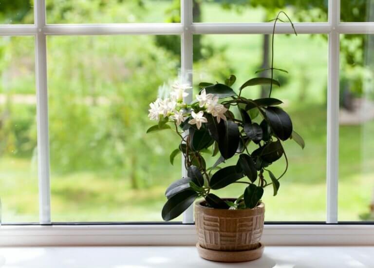 Blomma i fönster
