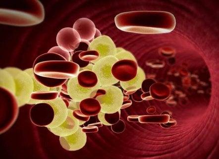 kolesterol i blodet
