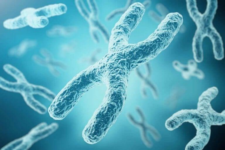 X-kromosomen