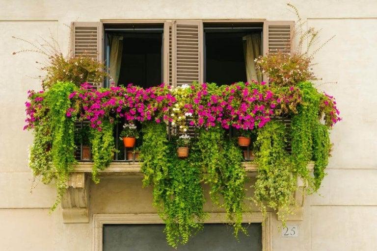 14 miniträdgårdar med en harmonisk atmosfär