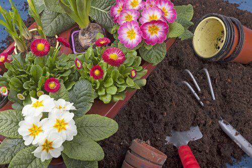 Växter i trädgården.