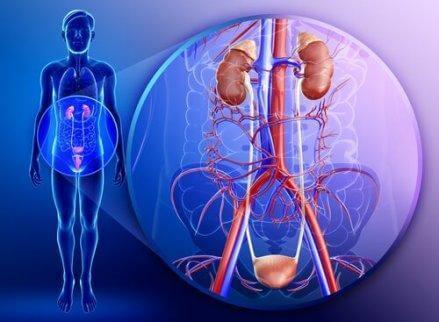 Upptäck persiljans goda egenskaper för kroppen