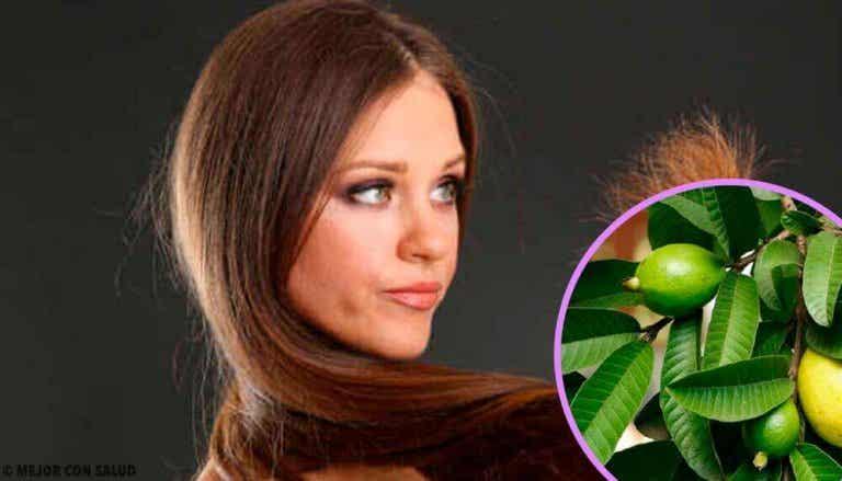 Guavablad för skadat hår: en naturlig behandling