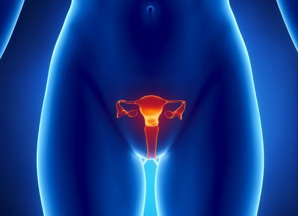Hur menstruationscykeln fungerar