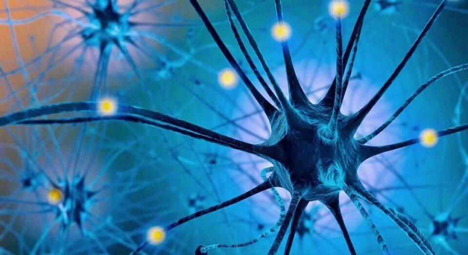 Serotonin i hjärnan