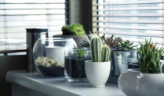 Spännande idéer för att plantera en kaktus