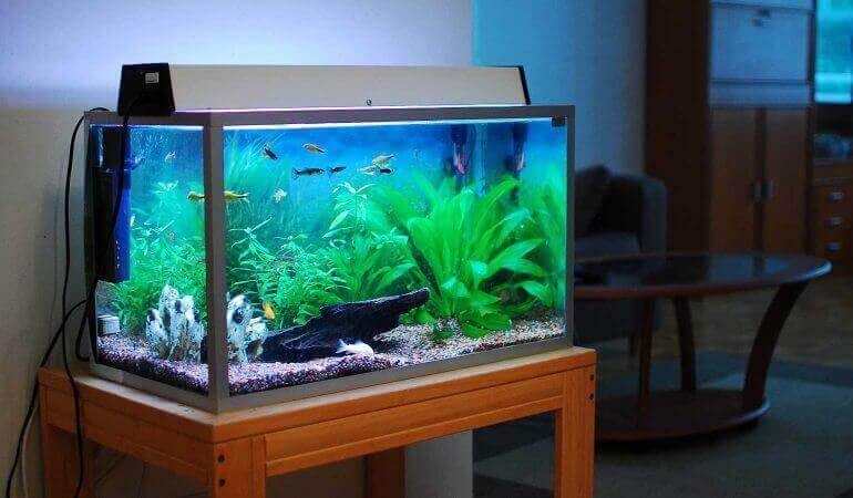 akvarium i vardagsrum