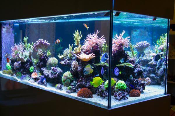 Akvarium med koraller.