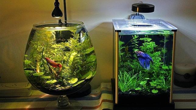Det bästa sättet att rengöra ett akvarium