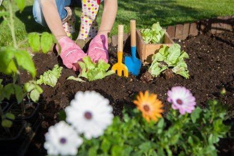 7 sätt att använda vinäger i trädgården