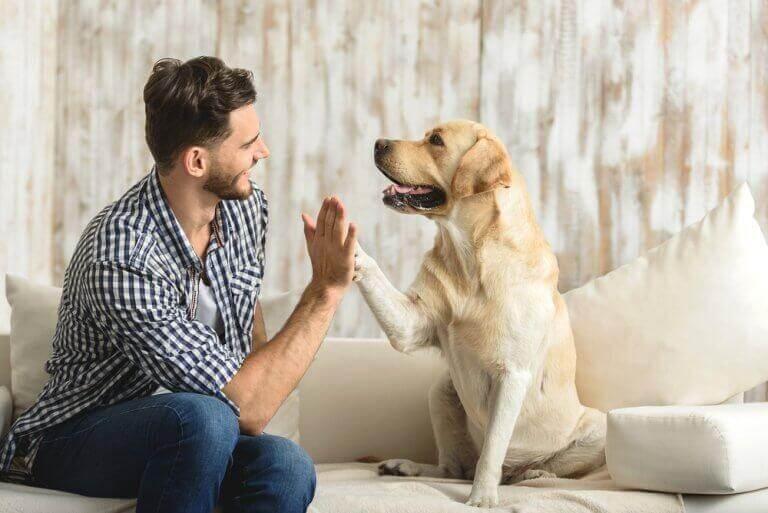 Hund ger high five till sin ägare